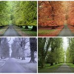 Trees changing color in the spring, fall, winter, and summer.