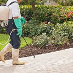 Outdoor Pest Control in the Hamptons and Eastern Long Island