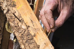 Termite Treatments From Twin Forks Pest Control®