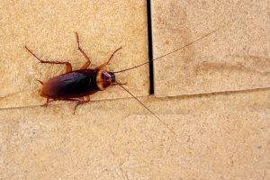 Roach Removal from Twin Forks Pest Control