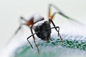 Ant Control from Twin Forks Pest Control®