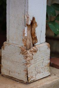 Termite Damage | Twin Forks Pest Control