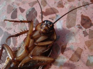 cockroach extermination eastport twin forks pest control