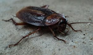 Cockroach Removal East Moriches Twin Forks Pest Control
