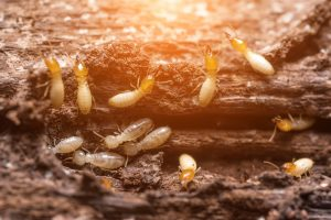 Termite Removal Jamesport, NY Twin Forks Pest Control