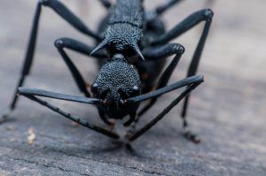 Ant Extermination in Laurel, NY by Twin Forks Pest Control