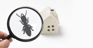 A magnifying glass focusing on a house and revealing a termite.