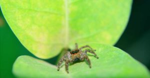 A close-up image of a spider on a leaf.