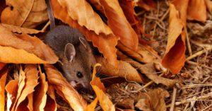 fall-pests